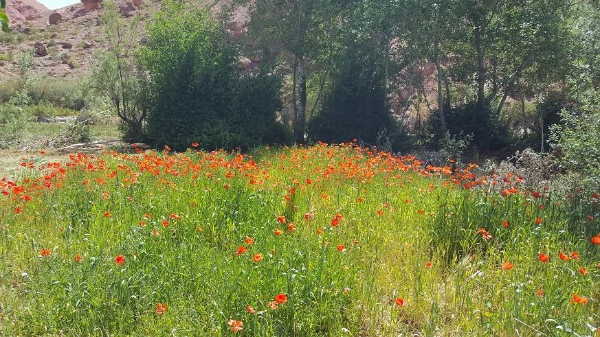 Stage chant et randonnée dans la vallée des roses