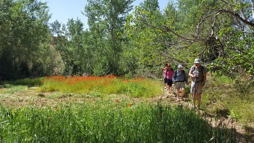 Les jardins et les khasbahs de la vallée des roses